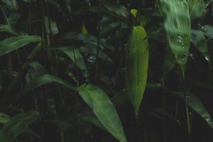 fond vert foncé de plantes