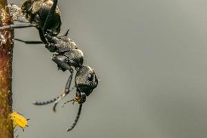 fourmi sur une plante