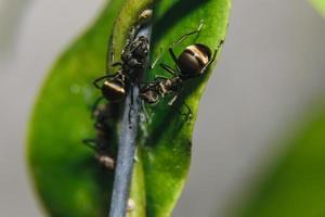 fourmis sur une plante