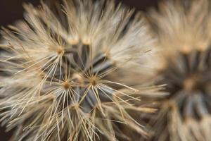 gros plan de fleurs sauvages marron