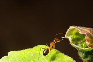 fourmi sur une feuille