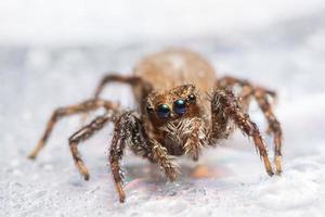 araignée dans la nature