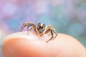 araignée sur le doigt d'un homme