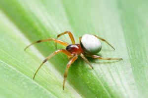 araignée sur une feuille