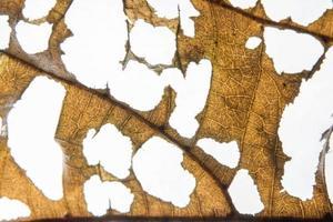 fond de feuille marron photo