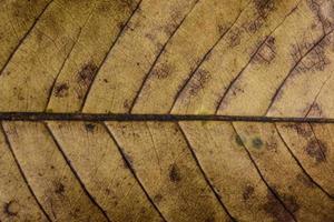 fond de feuilles sèches photo