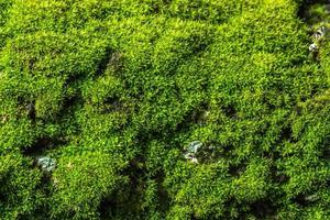 fond de mousse verte