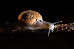 escargots sur une branche photo