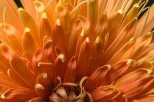 fond de fleur orange