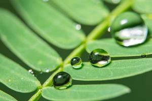 gouttes d'eau sur une plante