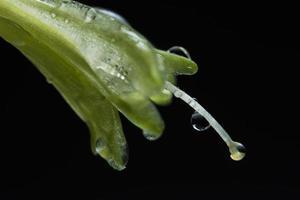 gouttelettes d'eau sur les pétales de fleurs photo