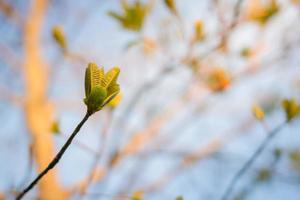 photo douce de feuilles vertes