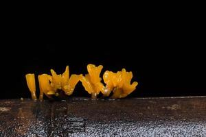 gros plan de champignons orange