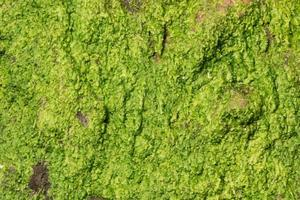 Gros plan de mousse de litchi vert