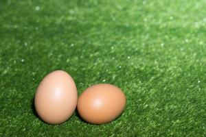 oeufs de poule sur fond vert photo