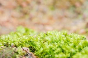 Gros plan de mousse de litchi vert photo