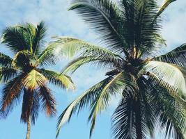 deux palmiers photo