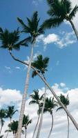 palmiers contre un ciel bleu