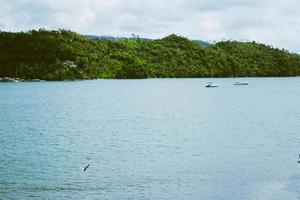 collines vertes près de l'océan photo
