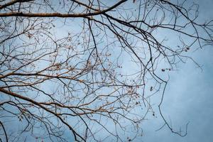 branche d'arbre sur le ciel bleu d'hiver. photo