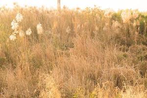 lumière du soleil dorée sur l'herbe photo
