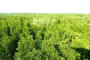 arbres verts sur fond blanc photo