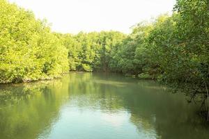 rivière de la forêt de mangroove photo