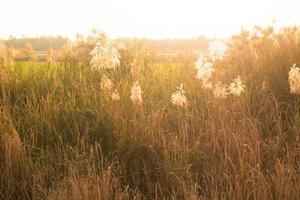 champ de blé avec la lumière du soleil photo