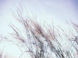 herbe sauvage contre le ciel photo