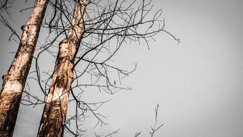 arbres nus et ciel nuageux photo