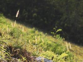 champ d'herbe sur une pente