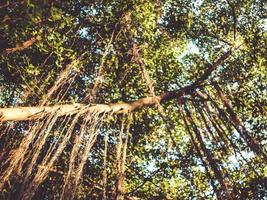 arbres de la forêt tropicale