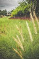 champ herbeux pendant la journée photo