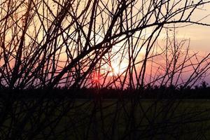 silhouettes de branche d'arbre au coucher du soleil photo