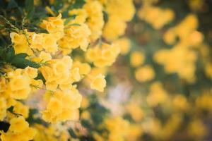 gros plan, de, fleurs jaunes, dans, a, jardin