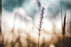 herbe sauvage au soleil à l'extérieur photo