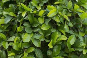 les feuilles vertes en arrière-plan.