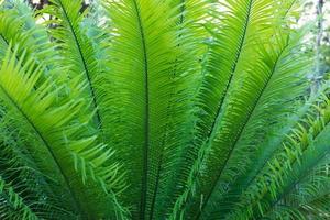 fond et texture des feuilles de fougère.