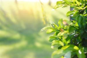 feuilles vertes à la lumière dorée