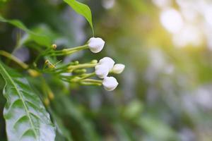 gros plan, de, fleurs blanches photo