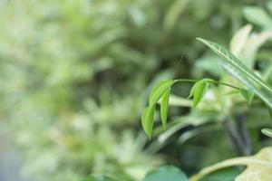 les feuilles supérieures affaiblissent l'arrière-plan, les modes de vie, la nature, le vert