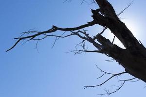 silhouette d'un arbre contre un ciel bleu photo