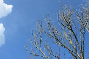 arbre nu contre un ciel bleu