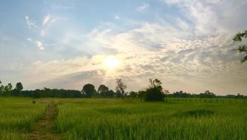 champ herbeux vert