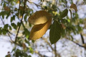 gros plan, de, feuilles jaunes et vertes photo