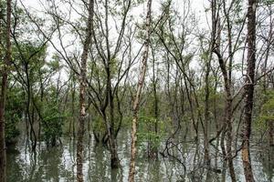 forêt de mangrove dans l & # 39; eau photo