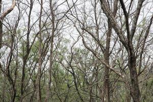 forêt de mangrove en Thaïlande photo