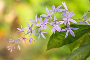 fond de fleur pourpre