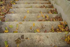 escaliers en ciment avec des feuilles