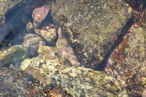 rochers à la mer photo